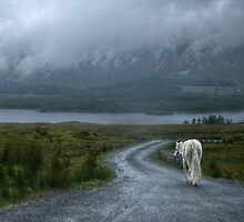 White Horse on Connemara Lane by Andy Morley