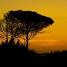 Pine Tree silhouette on Barrosa Beach by Timothy Adams