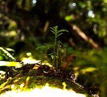forest greens by Daniel MacGibbon
