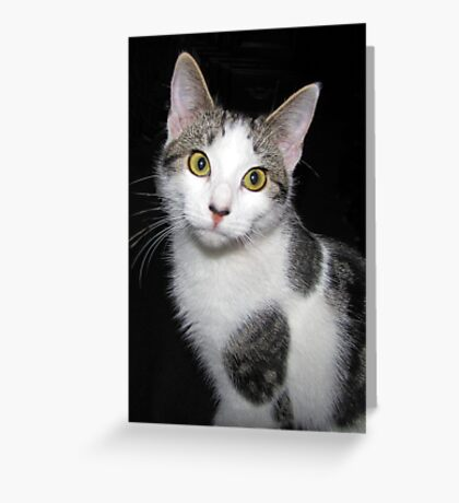 Baby Abby Greeting Card