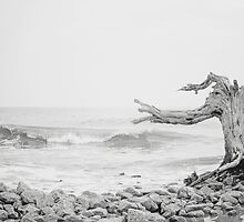 Driftwood by anchorsofhope