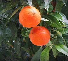 Oranges  by rasim1