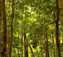 Daintree Forest - Mossman Gorge - Trek 2 by Geoffrey Thomas