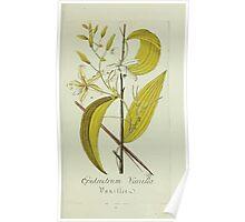 Plantarum Indigenarum et Exoticarum - Lukas Hochenleitter und Kompagnie 1788 - 018 - Epidendrum Vanilla or Mexican Vanilla Poster