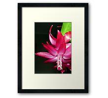 Pink Prelude Framed Print