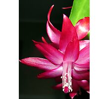 Pink Prelude Photographic Print