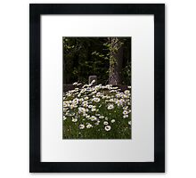 Daisy Flower Garden with White Daisies and Wood Fence Framed Print