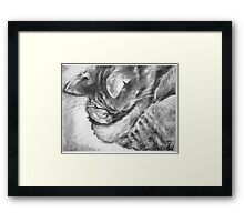 ROCKY! SLEEPY KiTTAH! Framed Print