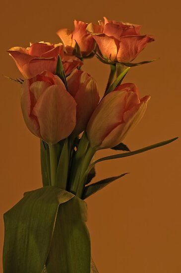 Peach Tulips and Roses - Ottawa, Ontario by Michael Cummings