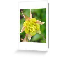 Yellow Columbine 2 Greeting Card