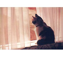 CALICO IN THE WINDOW Photographic Print