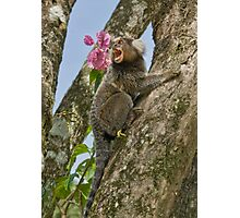 Marmoset Photographic Print