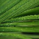 Drops and stripes by Catherine Davis