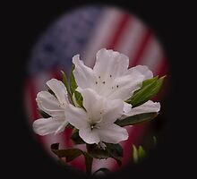 American Beauty ~ American Flag with White Azalea Flowers by roadsidestills