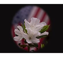 American Beauty ~ American Flag with White Azalea Flowers Photographic Print