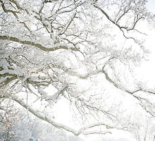 Snow and Trees by Robyn Liebenberg