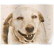 Brandy the dog Poster