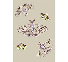moths are watching Photographic Print