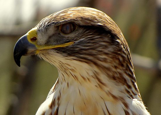 The Third Eyelid ~ The Nictitating Membrane by Kimberly Chadwick