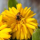 The Busy Little Bee by thruHislens .