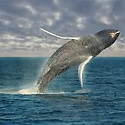 """""""A Humpback Whale Breaches Against an Ominous Sky"""" by krod18"""