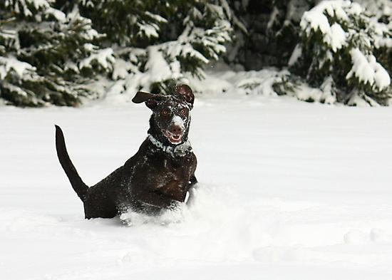 Jumping for Joy by Lori Deiter