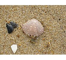 Crab shell with mussels in the sand Photographic Print