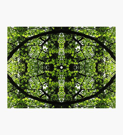 Eye of Spring Forest Photographic Print