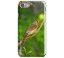 Cardinalis Cardinalis - Female Northern Cardinal | Center Moriches, New York  iPhone Case/Skin
