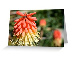 Fire Blossoms  Greeting Card