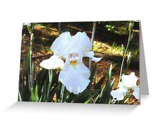 Beautiful White Iris Greeting Card