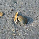 """""""Collecting"""" Seashells II by SilverLilyMoon"""