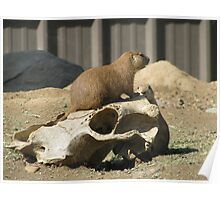The Prairie Dog's Conquest Poster