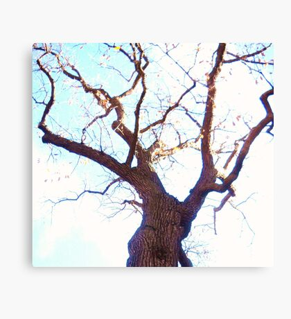 Beautifully Scruffy - Harvard - Massachusetts Canvas Print