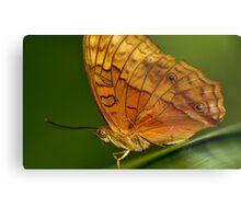 Cruiser Butterfly Metal Print