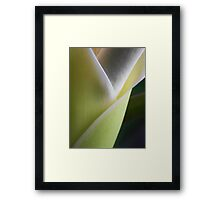 ©NS Delicate IA Framed Print