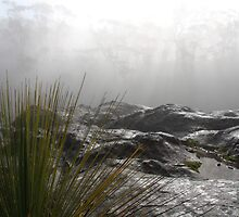 Spinifex in fog by artrate