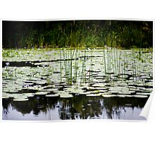 Lilly Pond in the Rain Poster
