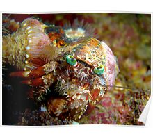 "Decorator Crab at ""Arkdive"" - Okinawa, Japan Poster"