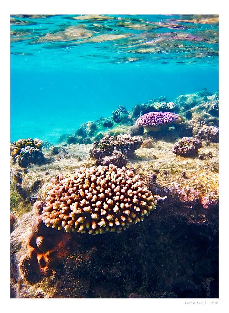 coral colours - rarotonga cook islands by David Sarkin