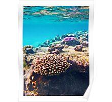 coral colours - rarotonga cook islands Poster