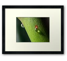 ©NS The Reflex IA Framed Print