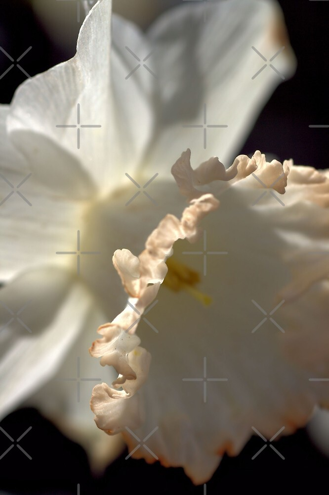 LOVE Daffodils by Joy Watson