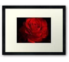 One Rose Red. Framed Print
