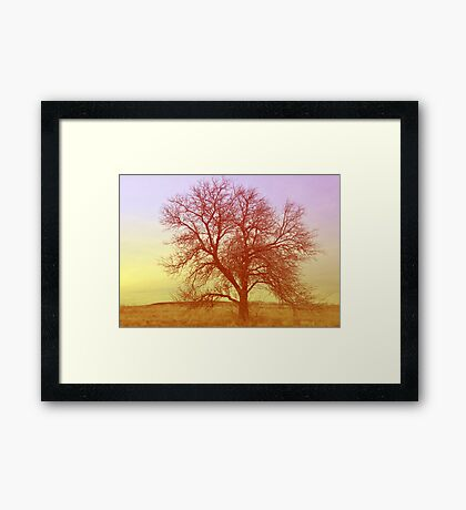 Tree - Saratoga Springs, Utah Framed Print