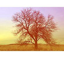 Tree - Saratoga Springs, Utah Photographic Print