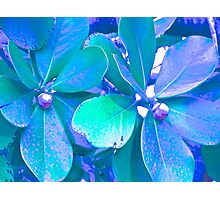Kona, Contemporary image, plants Photographic Print