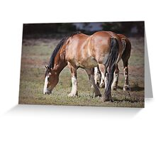Clydesdales Greeting Card