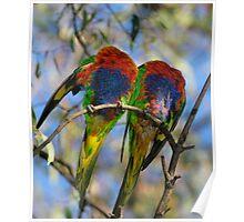 Headless Parrotts - Balyang Sanctuary Geelong Poster