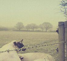 Sheep in Winter Warfield by Robyn Liebenberg